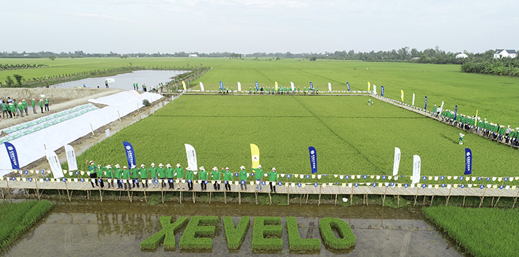 Xevelo Launching event in DongThap in Nov 2020. Photo by Corteva Agriscience.