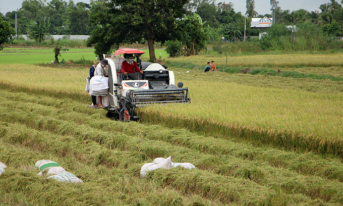 Rice supply chain in Mekong Delta may be broken