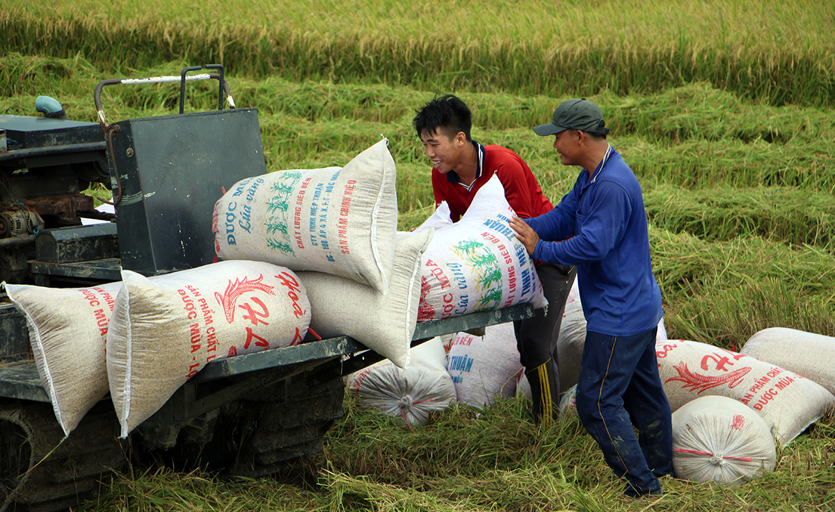 Workers transport paddy in Thoi Lai District, Can Tho City. Photo by VnExpress/Cuu Long.