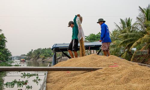 Ministry eyes green lane for waterway rice transport