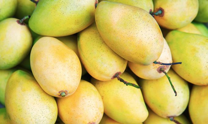 Vietnam biggest buyer of Cambodia's mangoes