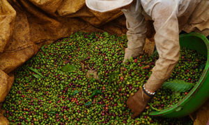 Global coffee market disrupted by Vietnam restrictions