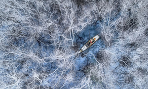 Fishing in white-veined mangrove forest wins international photo contest