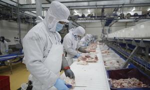 Masan, De Heus ink MoU to improve animal protein value chain