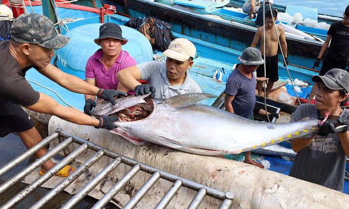 Vietnam goes past Thailand, becomes Israel's biggest tuna supplier