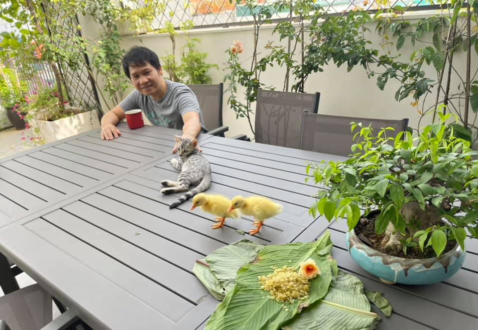 Trong Tan finds joy when raising two ducklings during the pandemic period. Photo courtesy of Tan