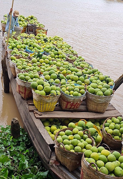 A boat brings baskets of Nam Roi pomelo to Binh Minh Town, Vinh Long Province. Photo by VnExpress/Chau Thanh