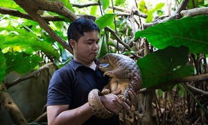 Wildlife traffickers creeping back as pandemic restrictions ease: UN report