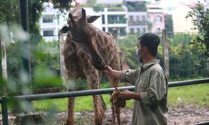 Prey to visitor shortage, Saigon zoo seeks $1.3 mln financial support