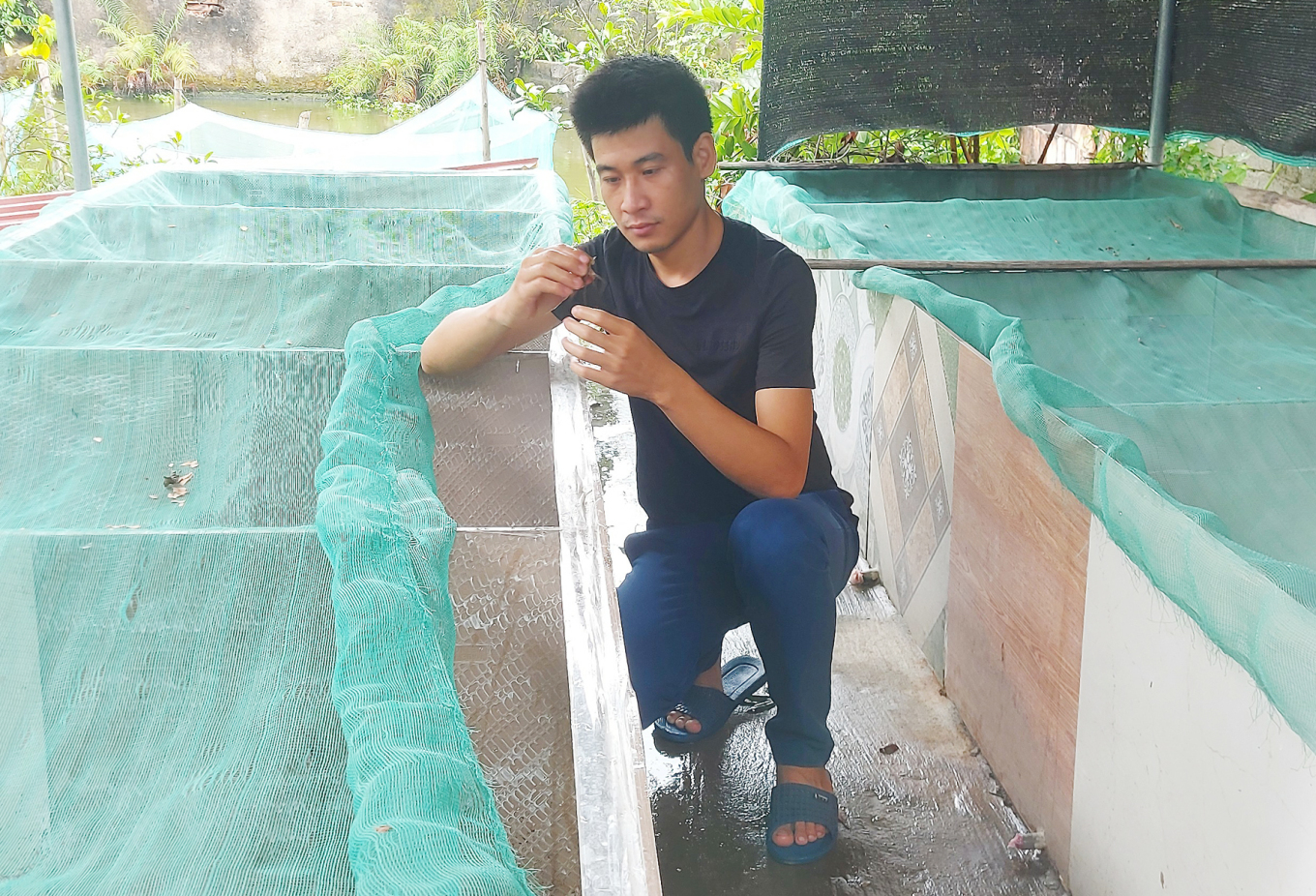 Le Van Thiet is checking for any unusual on his ca cuong that he raised for breeding, July 2021. Photo courtesy of Thiet