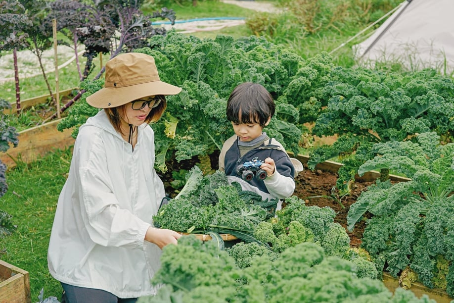Viet Anh and her son harvest vegetables in their garden, June 2021. Photo courtesy of Anh