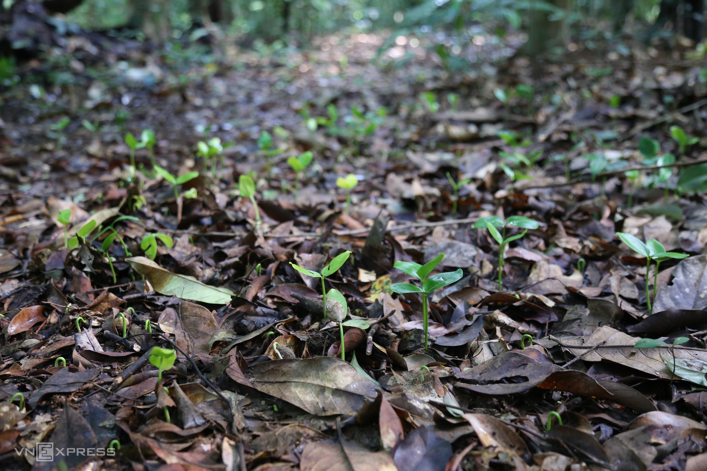 Quang Tri residents protect rare forest to let it grow again