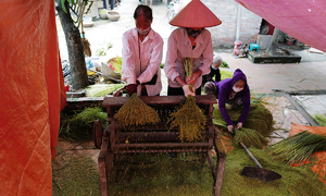 Come autumn and its 'com' time in Hanoi village