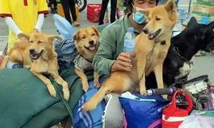 'Covid prevention pressure' spurs culling of 16 dogs, cat in Ca Mau