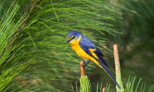 Escape to Da Lat plateau's kingdom of birds